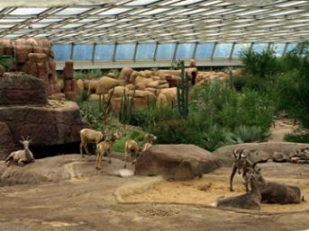 Little Zoo